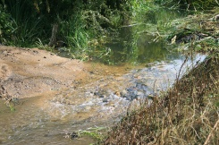Little Ouse habitat works example