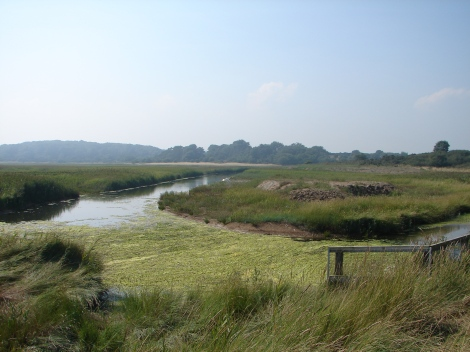 The Dingle Marshes in Suffolk - eel passage into this important breeding habitat is being improved through the installation of a damper at Walberswick to allow elvers upstream.