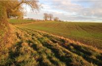 Buffer Strip - Water friendly farming report