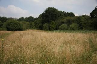 Unimproved_grassland